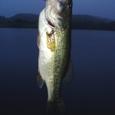 釣りりボウさん!高滝湖で44cm