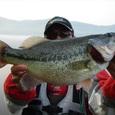 山中湖のへラックバス 41cm 15