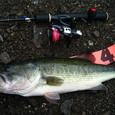 西湖 44cm 40up-35
