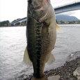 たれもんさん!河口湖で46cm