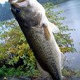 高滝湖 46.5cm