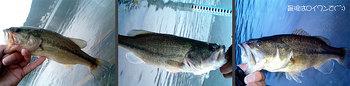 bass/0930_02