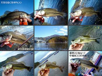 bass/1113_02